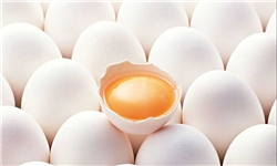 تخممرغ گران شد/ شانهای ۹۵۰۰ تومان