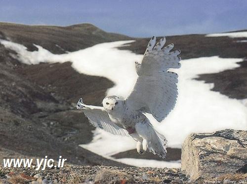 ۵ پرنده زیبا اما قاتل در دنیا +عکس