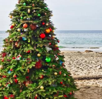 باشکوهترین درختان کریسمس سال 2014