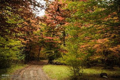 در آستانه سیزدهم نوروز/ توصیه سازمان جنگلها به مردم/ محیط زیست را در روز طبیعت حفظ کنید