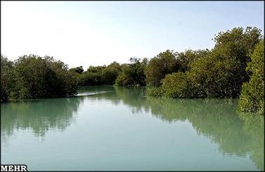 دیدار با درختان ایستاده بر آب/ جنگلی که از چشم آدم زاده شد!