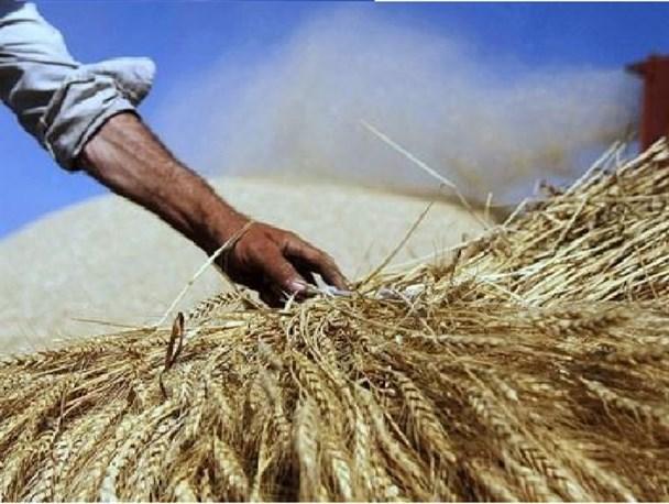 دولت با کشاورزان سر ناسازگاری دارد/سکوت ۱۳۰ روزه و بدون توجیه دولت کشاورزان را دلسرد میکند
